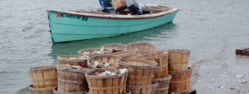 Fisherman oyster shell-planting