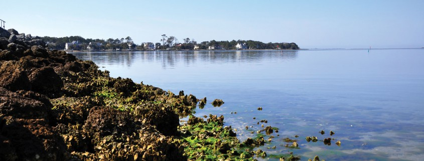 About nc oysters north carolina oyster blueprint oyster habitat in north carolina ranges from deep water reefs in the pamlico sound sub tidal to low relief patch reefs in intertidal waters and reefs malvernweather Gallery