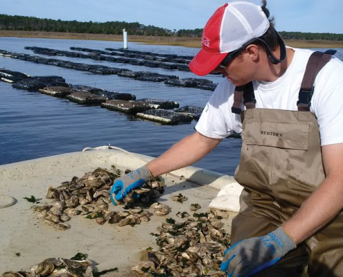 Millpoint Aquaculture