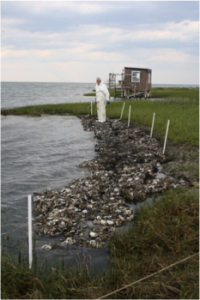 Fisherman and federation board member James Barrie Gaskill stands next to a section of oyster shell bag marsh toe revetment at Beacon Island.