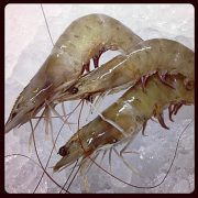 shrimp-brown